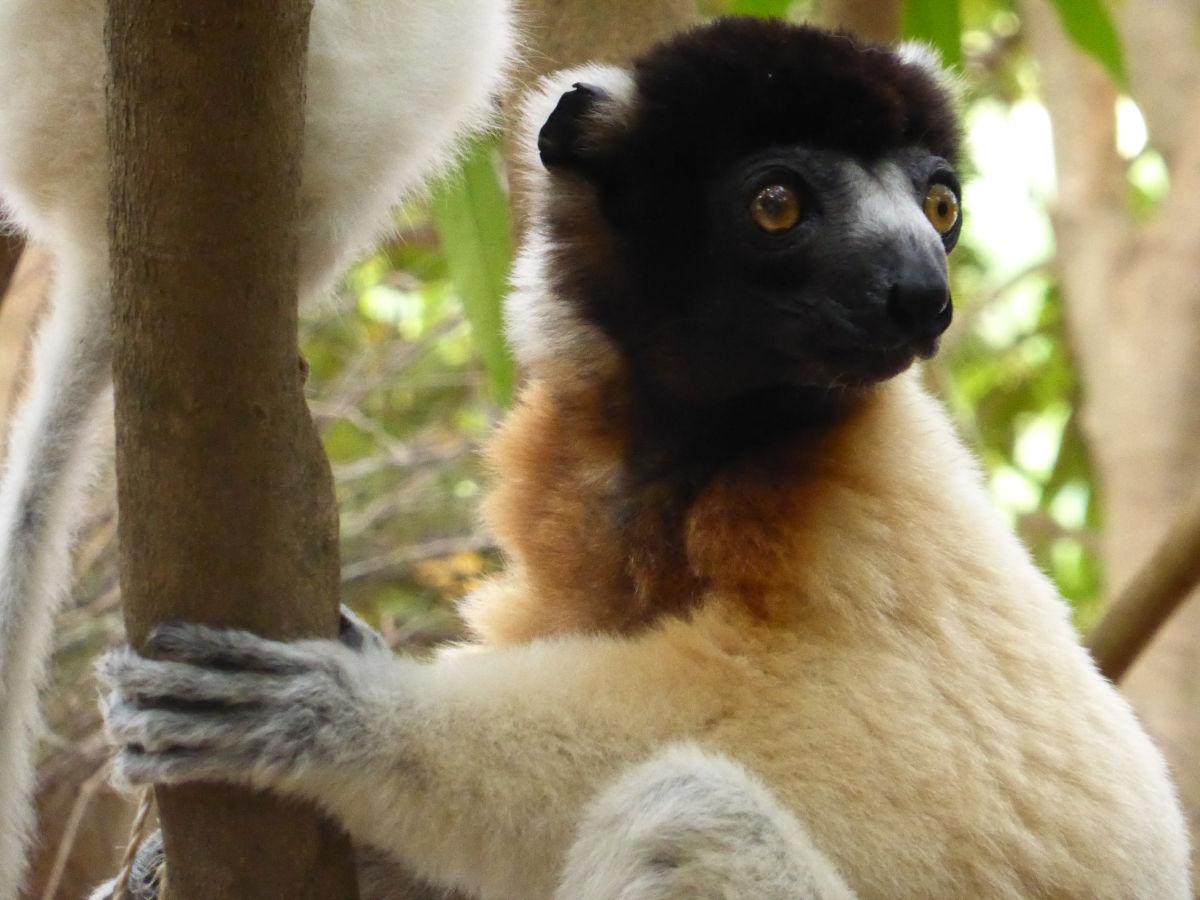 Jeu-concours Madagascar de Plante-essentielle.com