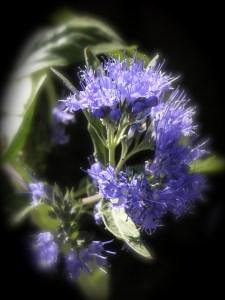 aroma-energie-hysope
