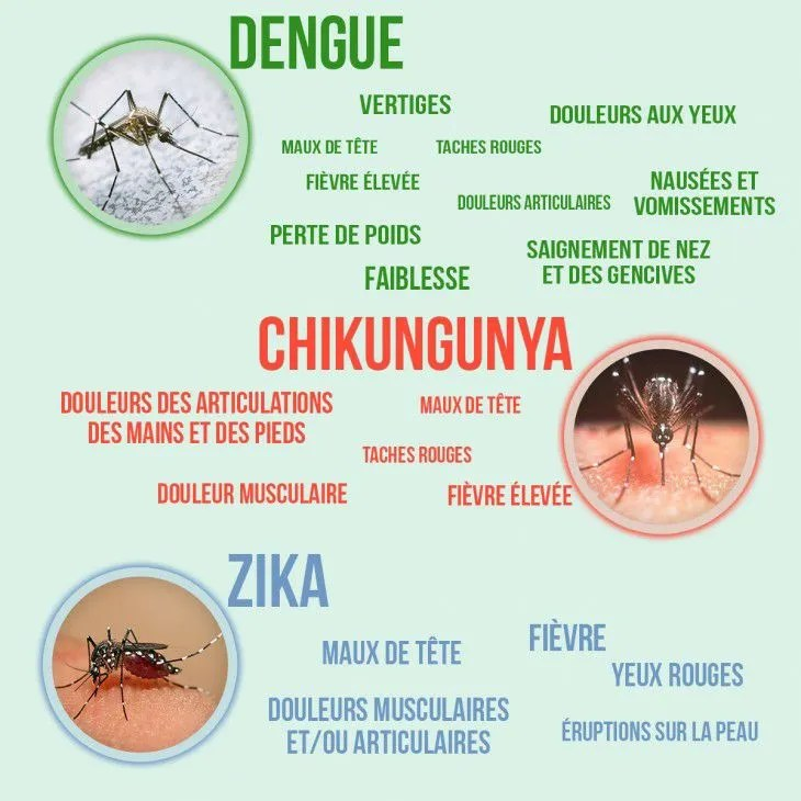 dengue-symptomes-martinique