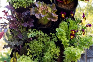 Why Vertical Gardening Could Be Your Ideal Way to Garden