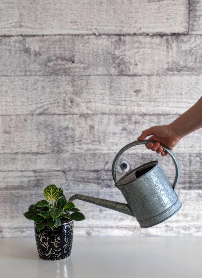 miniplant watergeven