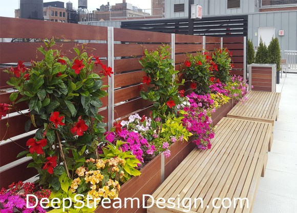 The differential height aluminum frame of these commercial wood planters creates a privacy screen wall and supports an integrated trellis with colorful flowers. Click for more info