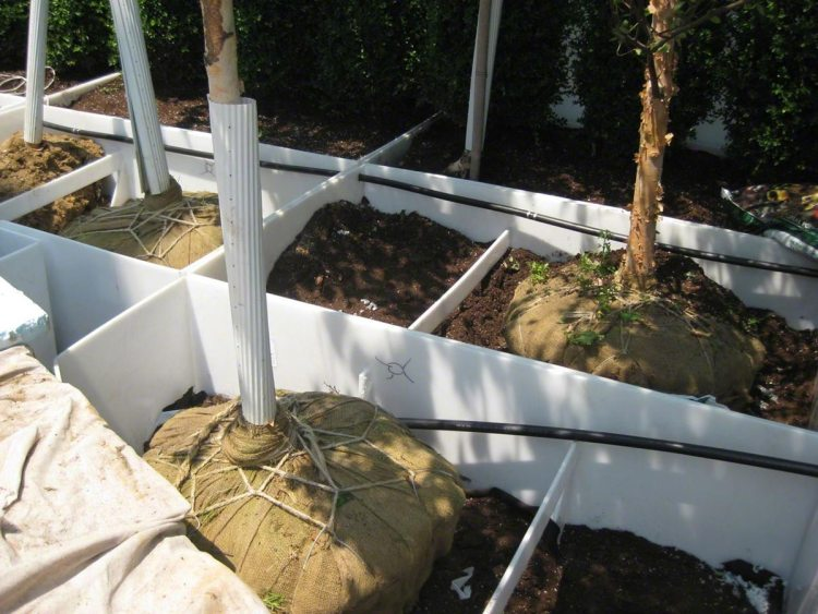 A large installation of Custom Welded Waterproof Planter Liners on a roof top are compartmentalized to isolate drainage problems. Drip irrigation lines are inserted through the top of liner walls below soil level.