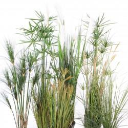 graminées et papyrus artificiels