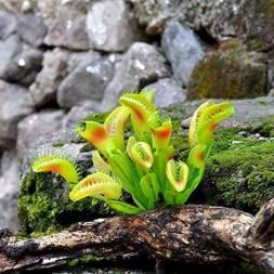 plante carnivore entretien