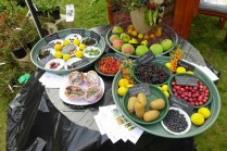 Unusual edible fruits (Pepinieres Ribanjou)