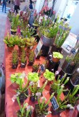 Nature et Paysages - collection of carnivorous plants