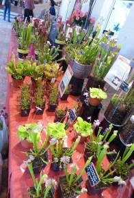 Nature et Paysages - collection of carnivorous plants