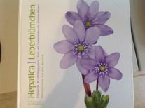 Hepatica, Leberblümchen by Andreas Händel