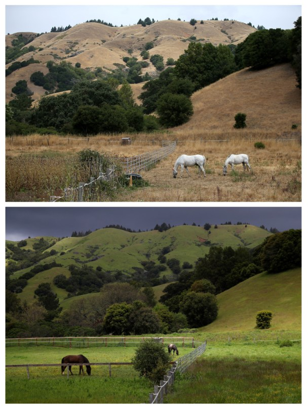 WOODACRE, CA - JULY 15, 2014: In this before-and-after composite image, (TOP PHOTO) Horses graze in a field of dead grass on July 15, 2014 in Woodacre, California. As the severe drought in California contiues to worsen, the State's landscape and many resident's lawns are turning brown due to lack of rain and the discontinuation of watering. (Photo by Justin Sullivan/Getty Images) WOODACRE, CA - APRIL 10, 2017: (BOTTOM PHOTO) Horses graze in a field on April 10, 2017 in Woodacre, California. Much of California's landscape has turned from brown to green as California Gov. Jerry Brown signed an executive order Friday to lift the State's drought emergency in all but four counties. The drought emergency had been in place since 2014. (Photo by Justin Sullivan/Getty Images)