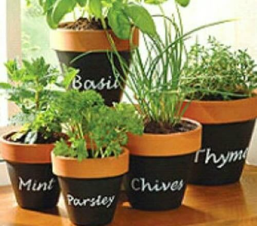 5 Dos And Don T For Planting Herbs In Containers Plant Instructions