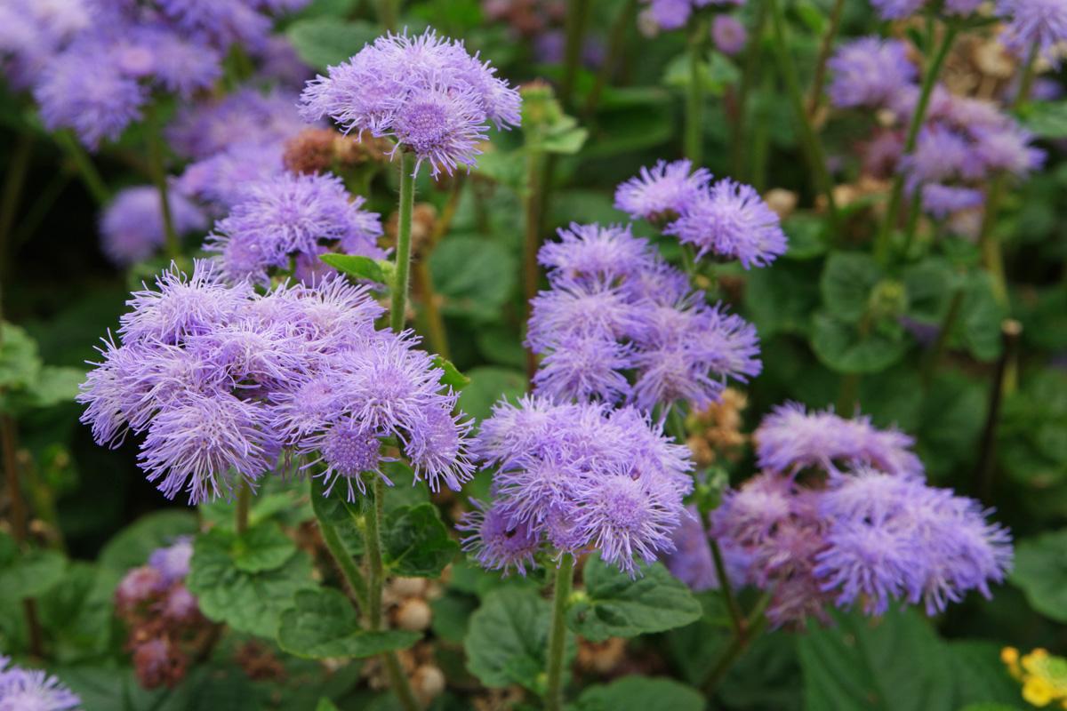Common Flowering Shrubs South