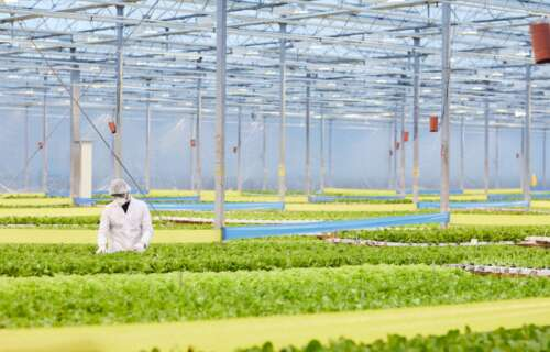 Greenhouses Agriculture Environment