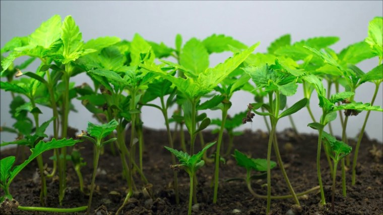 Plant Life 360 – Providing safe and certified organic amendments for farmers, growers, & gardeners.