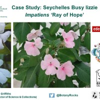 Eden Project's 'Ray of Hope' project