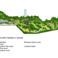 Managing the wild in the garden - 10 Scottish plant communities in Dundee Botanic Garden
