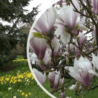 This gardener's journey through horticulture: Part 1