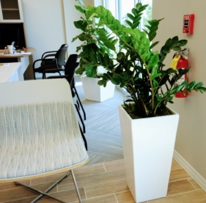 Office Plant in Tall Square