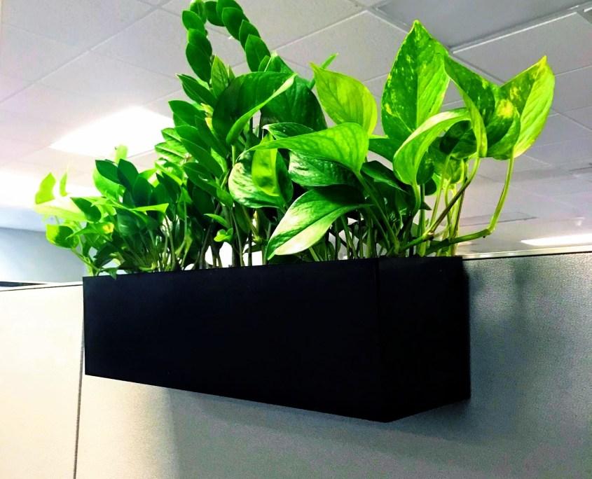 Cubical planters