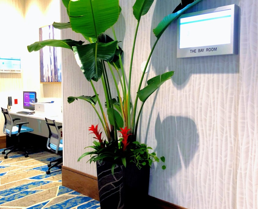 Indoor plants for hotel
