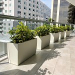 Outdoor Privacy Plantings For Balconies Plant Parents