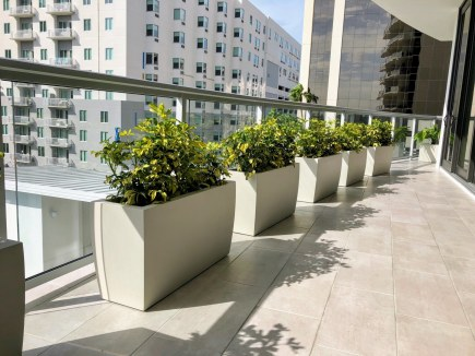 Plants on Urban Balcony