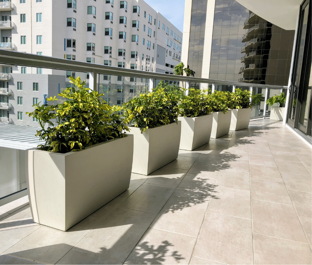 Privacy Screen Plantings