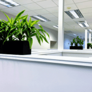 office plants cubicles