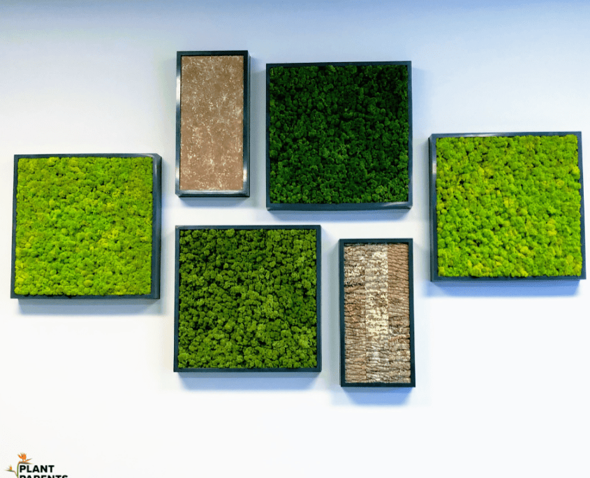 moss wall living wall for office