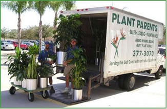 Plant Delivery and Plant Installations