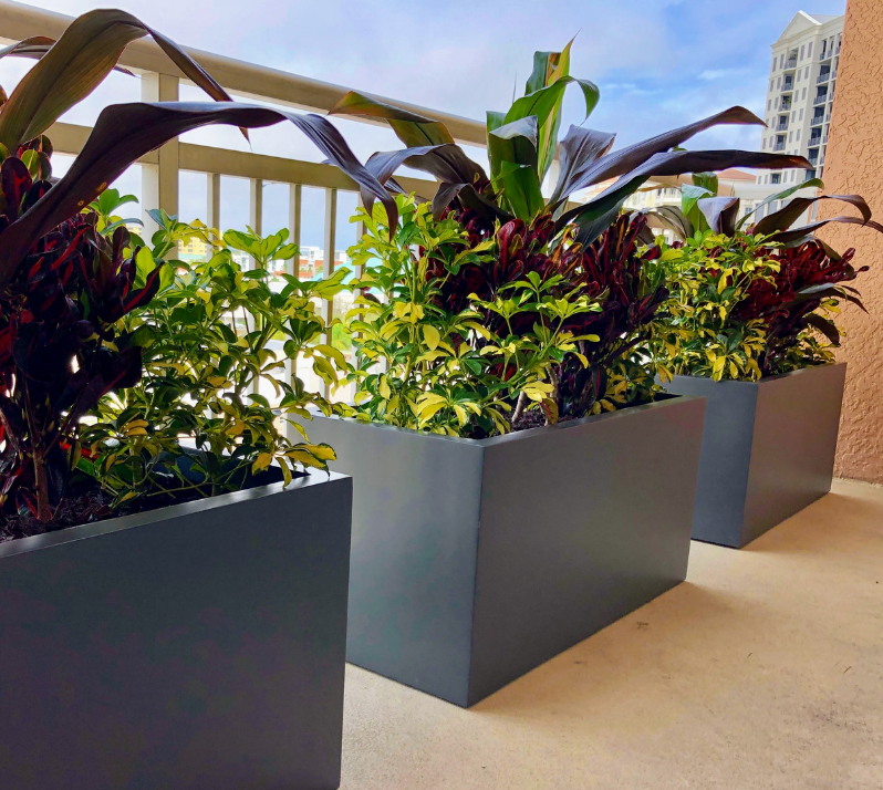 outdoor privacy plantings for balconies
