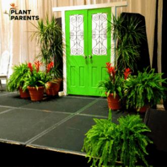 Plant rental for gala