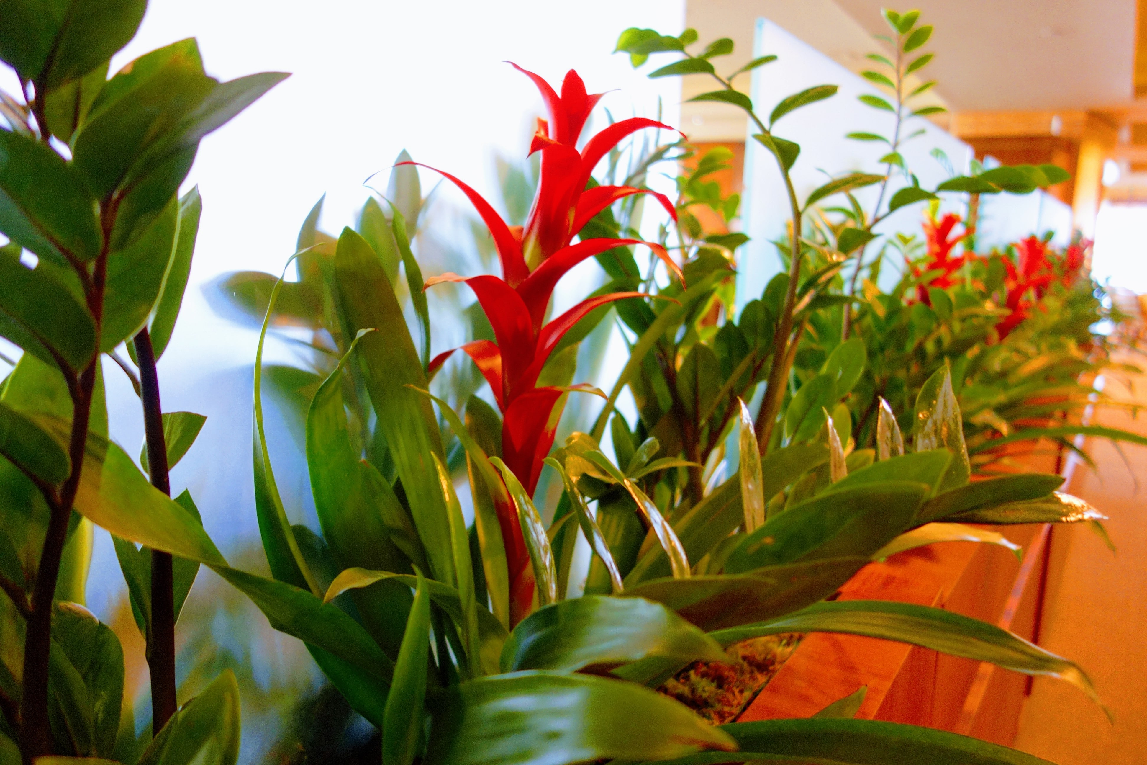 Indoor flowers and plants - site directory: a selection of sites