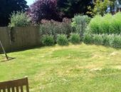 fence and grasses planting