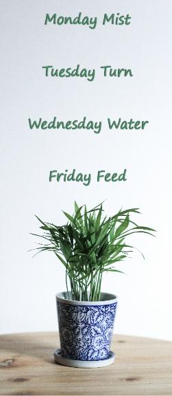 My Indoor Plants Keep Dying!!! - PlantPlots