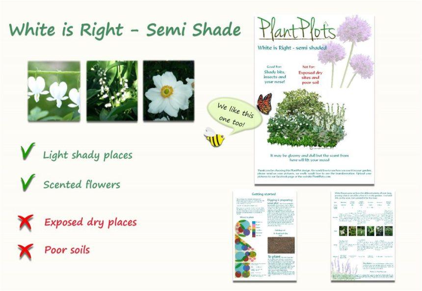plants for light shade garden border design product