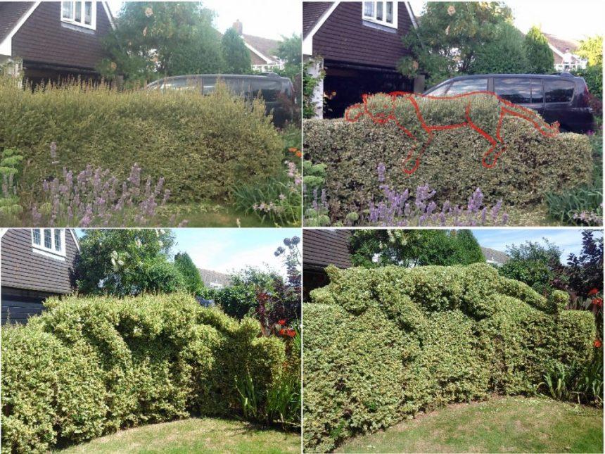 Topiary ideas - leopard