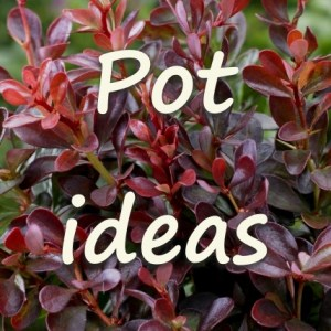 Pot Collections