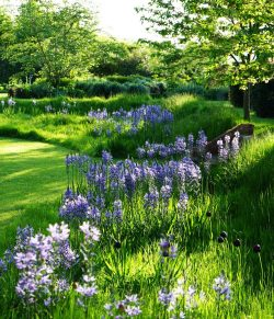 image of natural looking garden with sweeping lawns and blue flowers