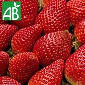 Plants Petits Fruits Fraisier Ostara A+ Bio