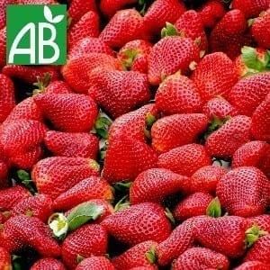 Plants Petits Fruits Fraisier Sonata A Bio