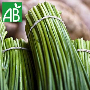 Plant chaud de persil Staro biologique à tige verte et longue