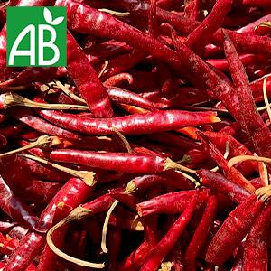 Plant chaud de Poivron Lamuyo biologique petit, long, fin et rouge