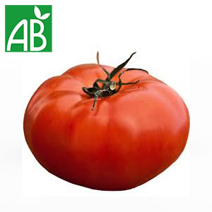Plant chaud de tomates Russe biologique à fruit gros, allongés et rouges