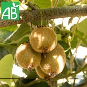 kiwi jenny bio