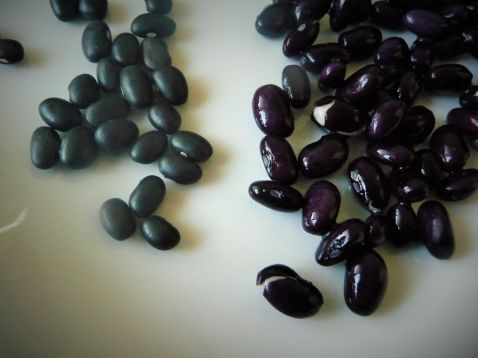 Black Turtle Beans double to triple in size aftter soaking