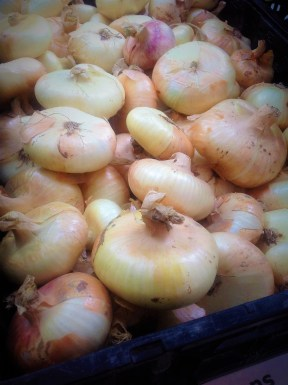 Sweet Cipollini Onions from Leaning Shed Organic Farm