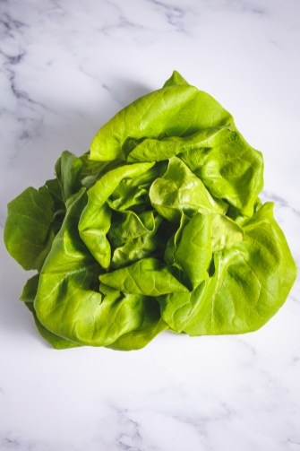 Beatiful Boston Bibb Lettuce has big leaves and sweet, tender texture