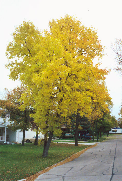 Trees Low Maintenance Landscaping