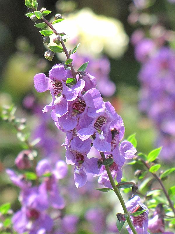 Perennial Flowers Bloom All Summer